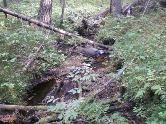 Так начинаются реки зимник пойма реки